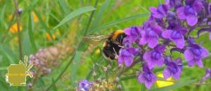Bee MG